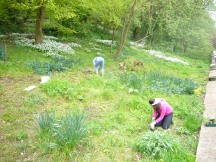 Hard at work planting wild flowers